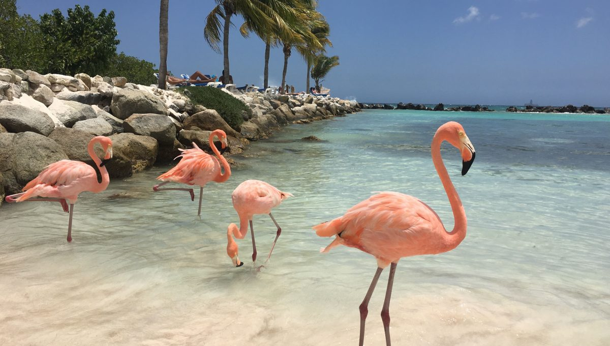 De beste hotels op Aruba
