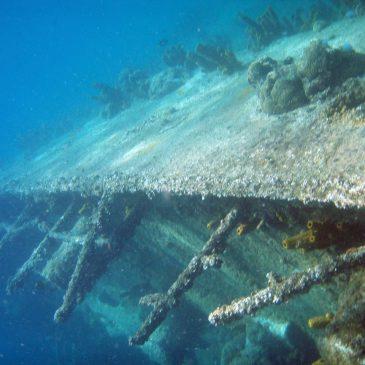 5 beste duiklocaties van Aruba